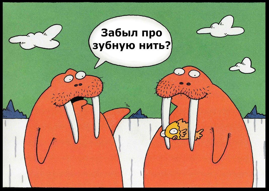 Картинка зуб прикол, февраля поздравление