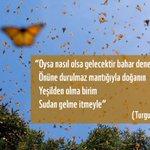 RT @WWF_TURKIYE: #TurgutUyar https://t.co/Z8evjUnv...