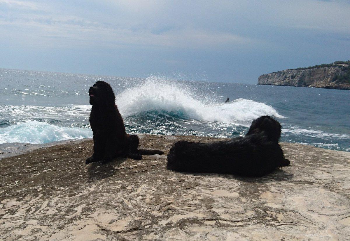 That&#39;s life for the newfies    #newfie #dog #pet #summer #sun #greece<br>http://pic.twitter.com/JCmbKJeLEM