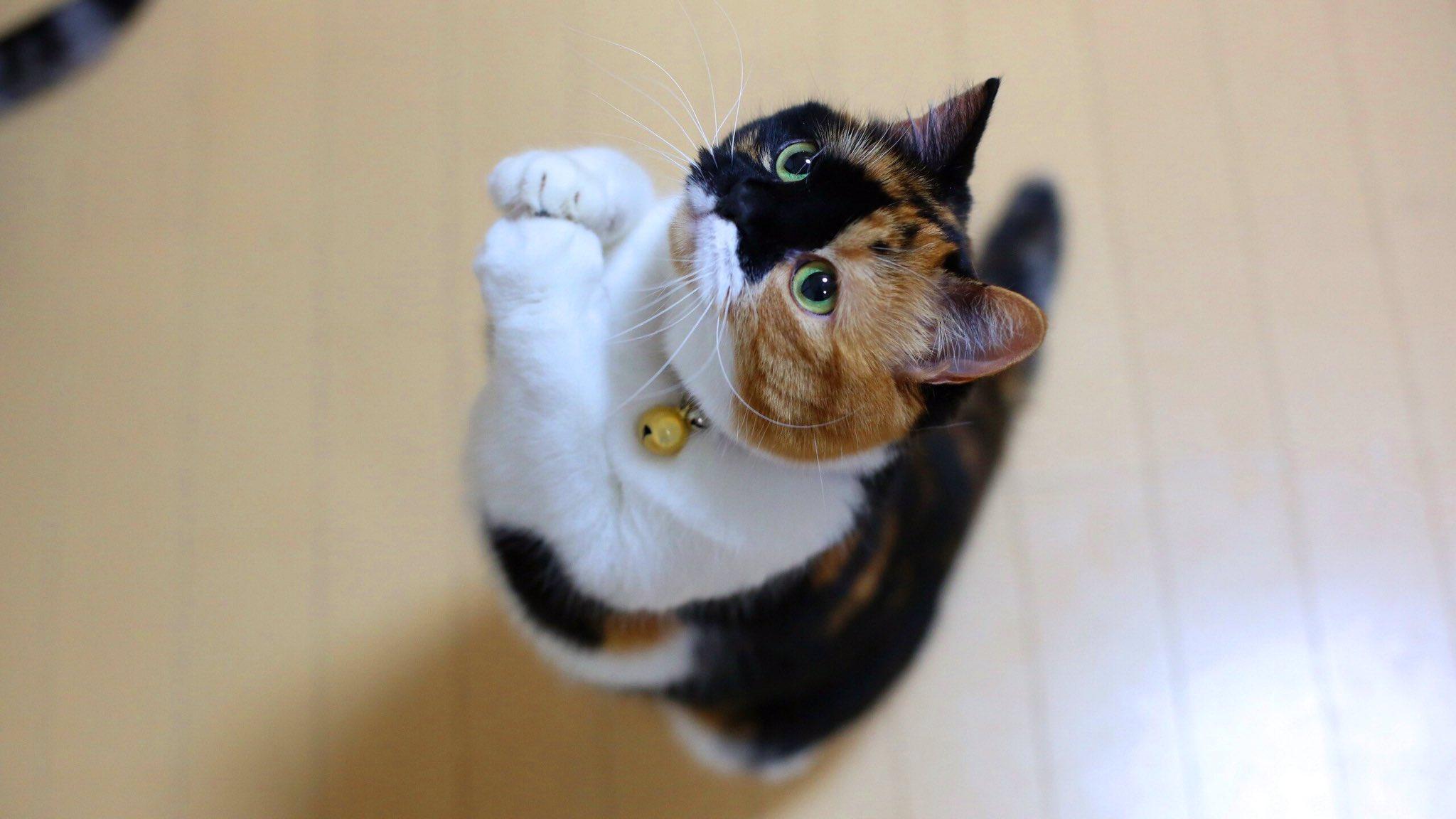 Котики с приколами пожалуйста, новогодние своими
