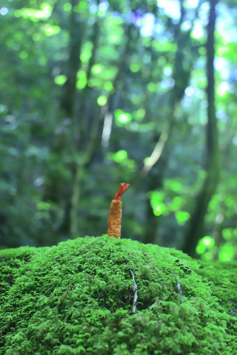 シュールすぎるww大自然と共に撮影された被写体はエビフライだったww