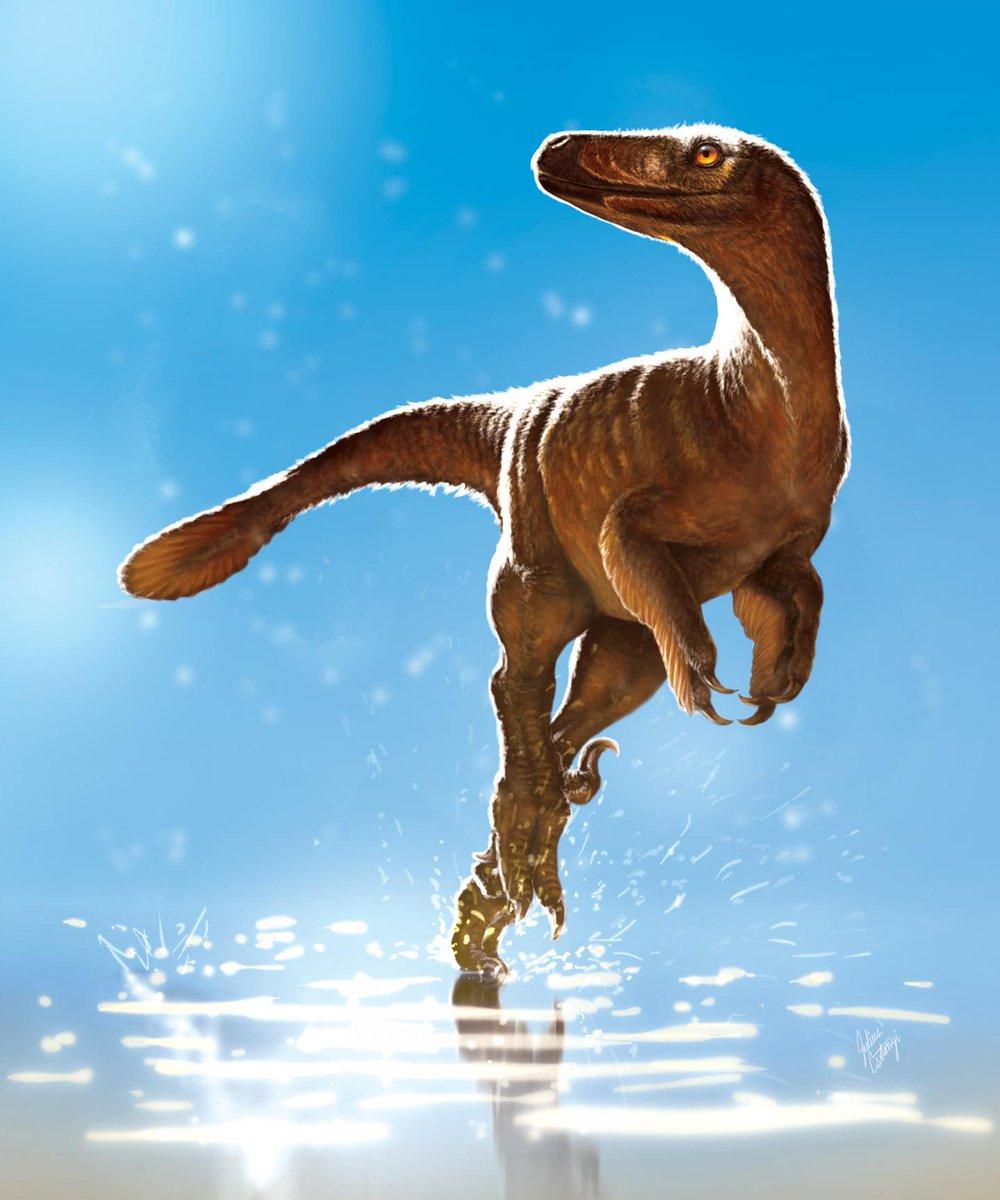 This #dinosaur's hips don't lie – a pelvic bone led to a reclassification of species  http:// ow.ly/og0L30ezvkx  &nbsp;   #CdnSci <br>http://pic.twitter.com/45SCL06U1p