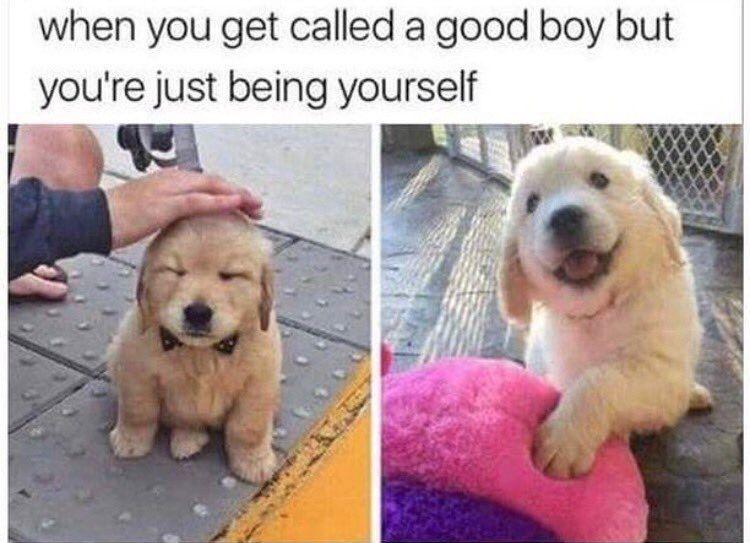 Wholesome Memes (@WholesomeMeme) on Twitter photo 22/08/2017 08:57:05