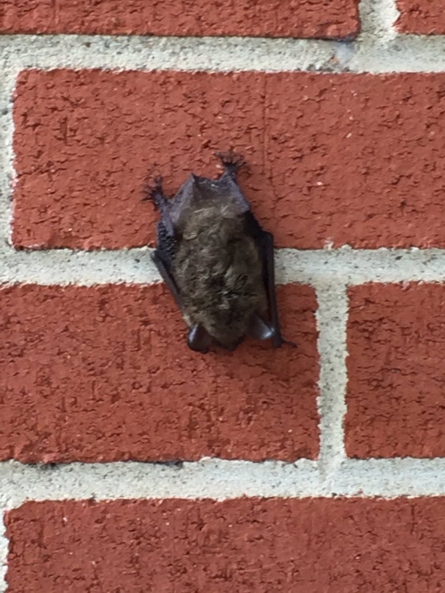 You never know what you'll see hanging around EST!