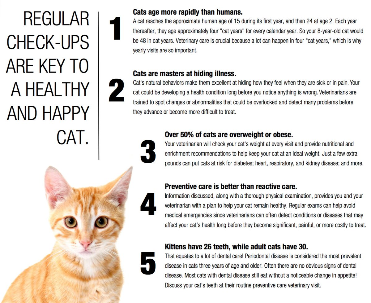 How to Change Your Cats Routine How to Change Your Cats Routine new pics