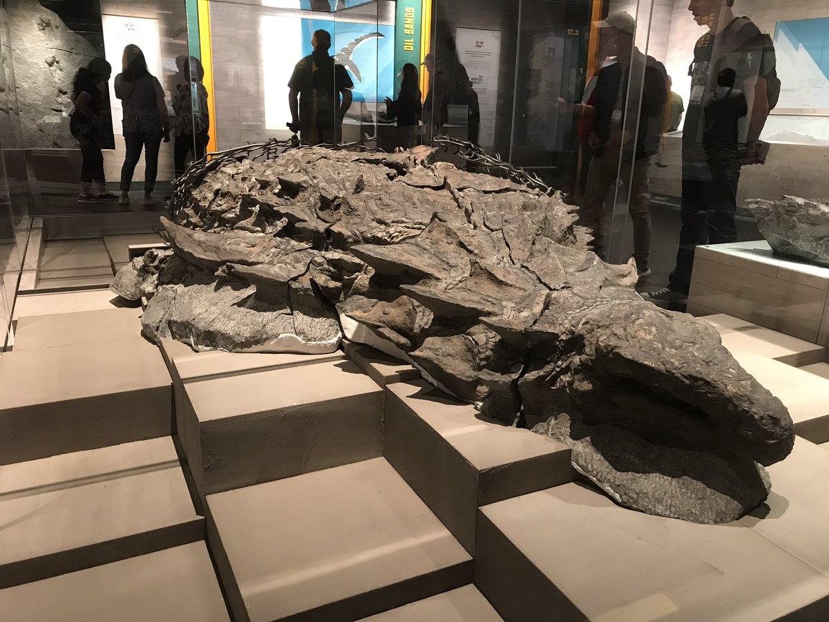 例の鎧竜の化石。レプリカではなく本物。 https://t.co/yz1XnDh5F6