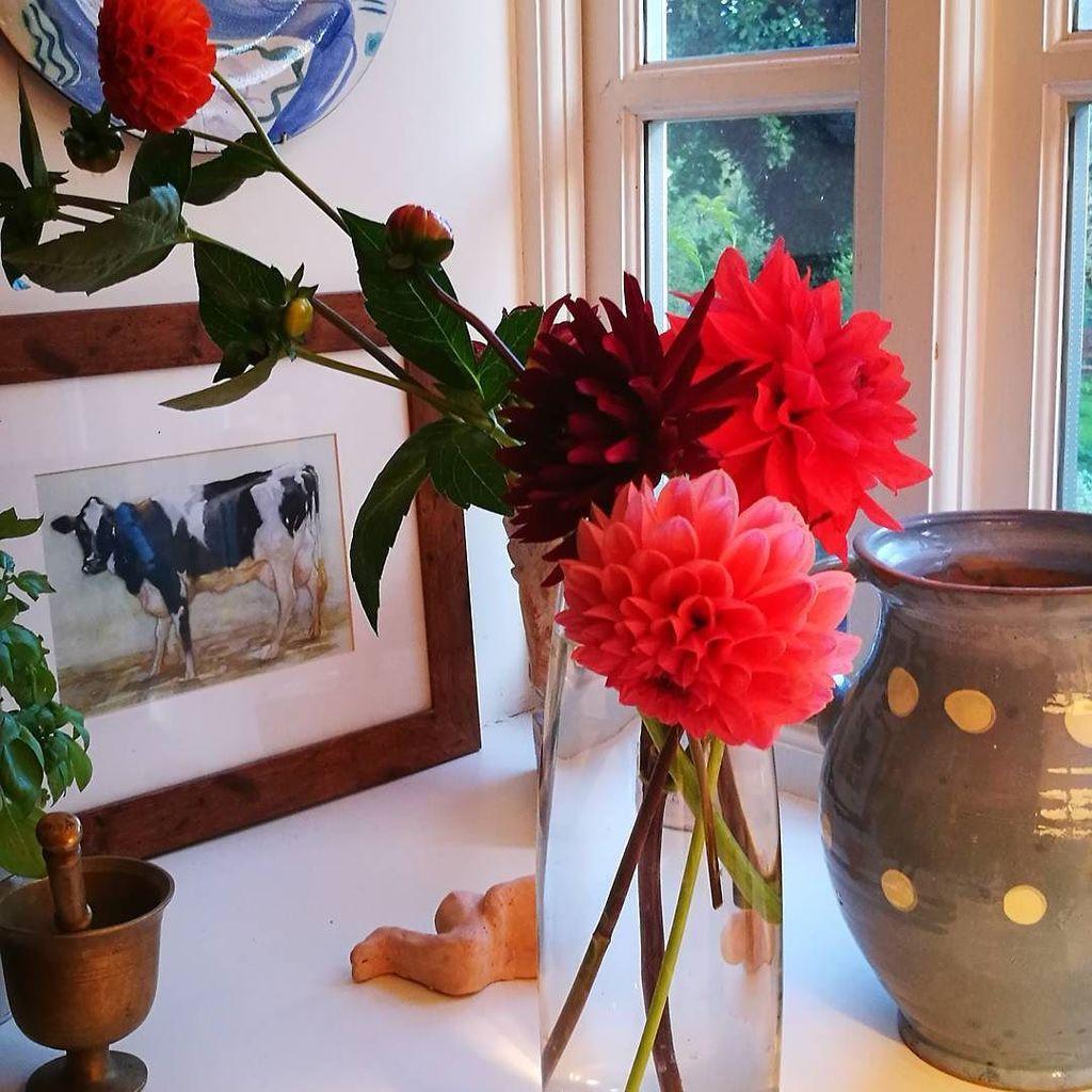 The odd ones. #britishflowers #dahlias #summerflowers <br>http://pic.twitter.com/zwMIyXnIDt