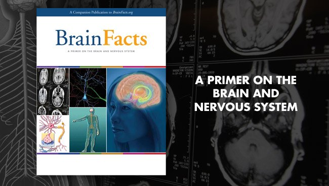 #Teaching students about the brain? The BrainFacts book is here to help! One free copy per #educator in US/Can. #k12  http:// bit.ly/2i2ALiI  &nbsp;  <br>http://pic.twitter.com/NCsIomMTPj