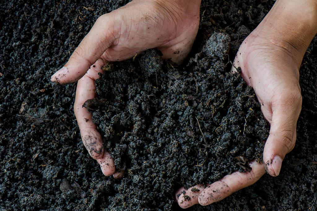 JBS anuncia investimento de R$ 30 mi na criação de empresa de fertilizantes https://t.co/Pnu29A3KKJ