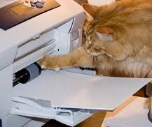 Mr. Kitty may be trying to help but leave the copier repairs to our expert technicians! We got you covered! #printer <br>http://pic.twitter.com/OkxRoVv9nQ