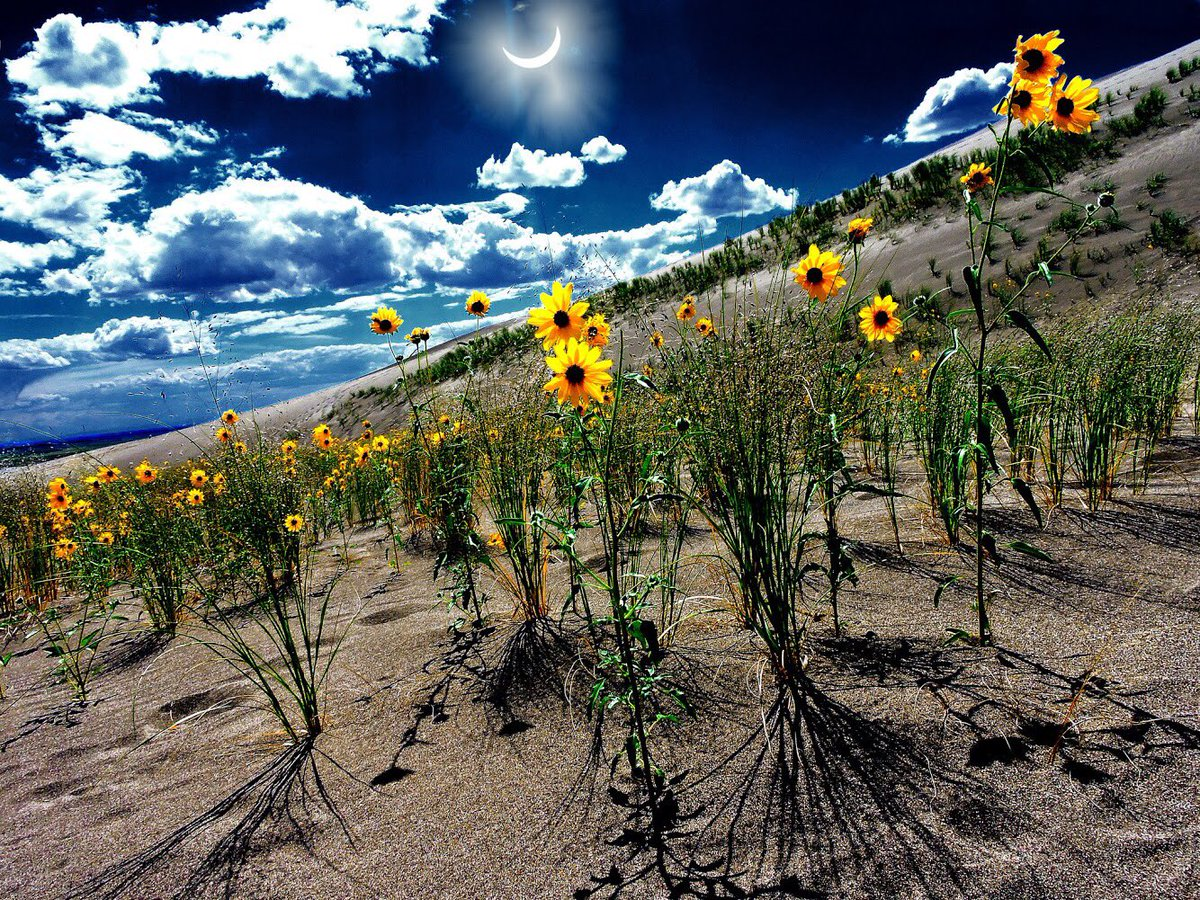One last stunning #Eclipse2017 pic from Great Sand Dunes National Park #Colorado