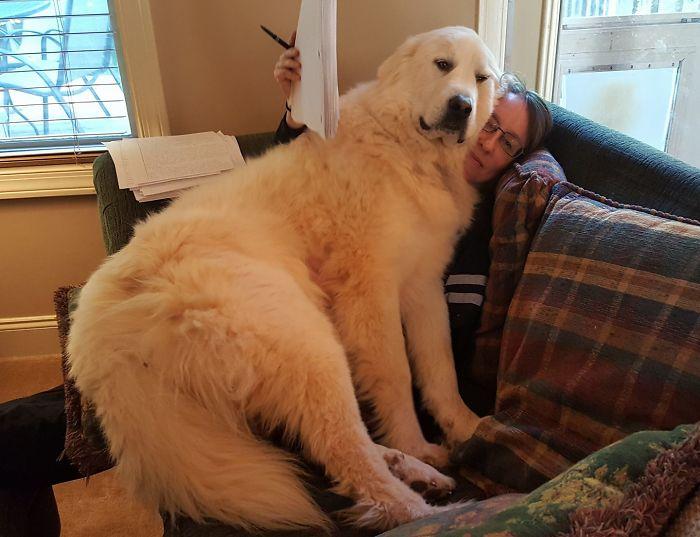 子犬のように膝に乗ってしまう大型犬たちの画像わんさか。多幸感ある。