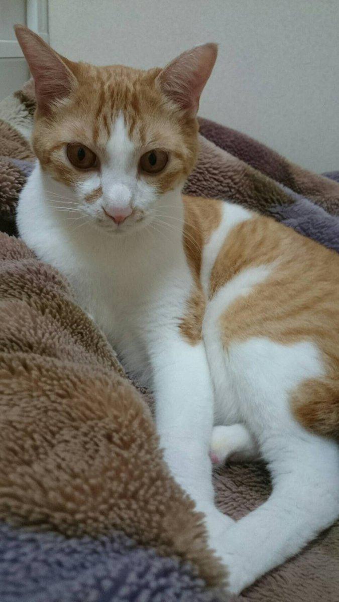 虎徹、今日で2歳(推定)なりました 猫だったらお前はもう立派な大人 だがお前は虎だからまだお子ちゃまだ☺️