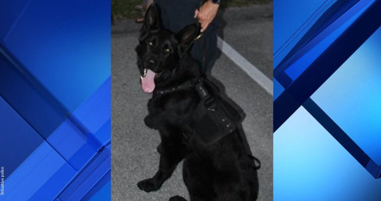 Police officer charged after K-9 found dead in hot car in Brevard --  https://t.co/l4K3fVY79D