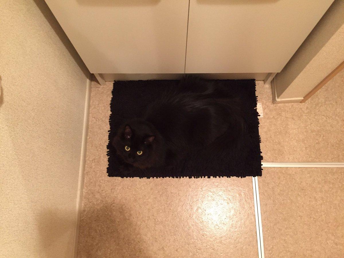 黒猫あるある?ww黒いマットの上にいると本気でどこにいるのかわかんないww