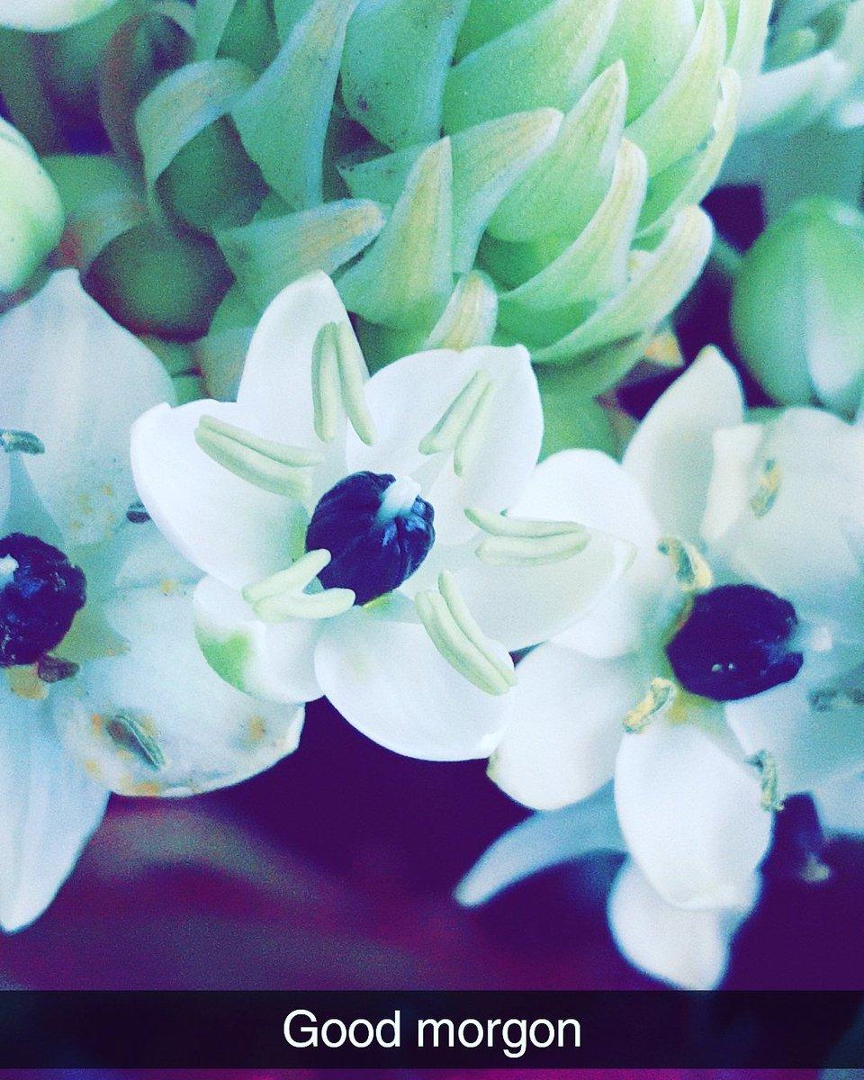 Flower Collection Uk On Twitter Good Morning Flowers Flowershop