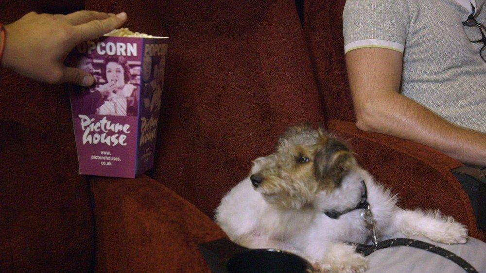 O cinema de Londres que recebe cachorros https://t.co/bhItXHsliE #G1