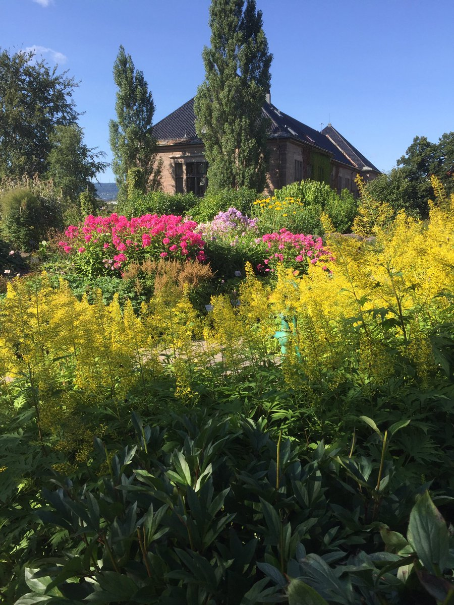 The botanical garden in #Oslo is looking wonderful in the autumn sun #Norway <br>http://pic.twitter.com/tygN2VM7lS