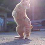 構えが達人すぎる?朝日もあいまってかっこよすぎる猫のポーズがかっこいい