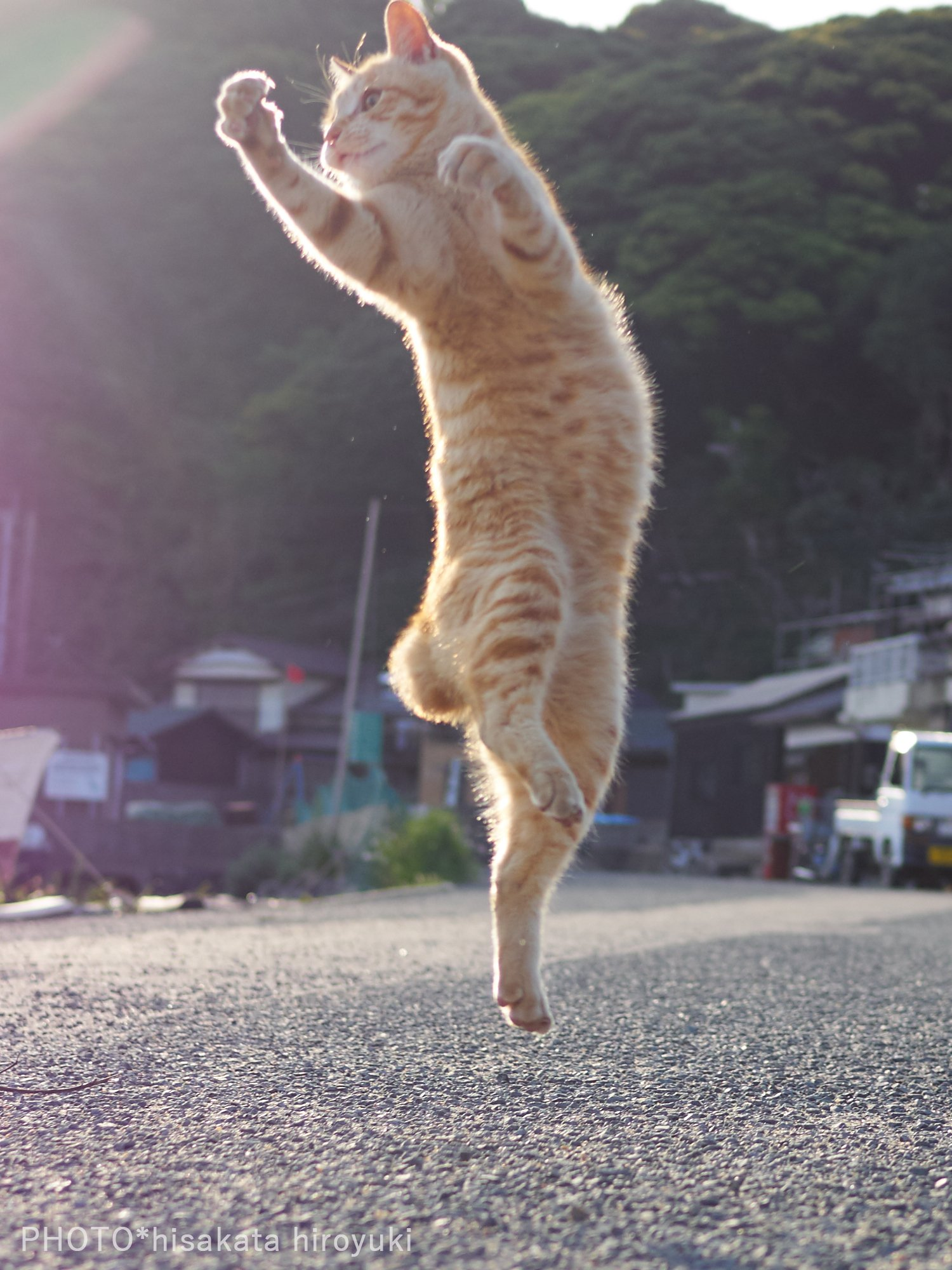 構えが達人すぎる?ww朝日もあいまってかっこよすぎる猫のポーズがかっこいいww