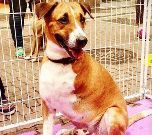>@Emais_Estadao: Após perder gata, @Tatawerneck adota cachorro com deficiência https://t.co/hChtRmknR7