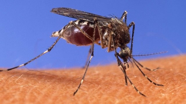 West Nile-infected mosquitoes found in 6 Louisville ZIP codes https://t.co/4Xfv7NR6z2