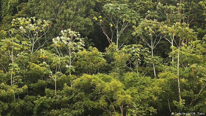 47 mil quilômetros quadrados: governo libera reserva na Amazônia para exploração. https://t.co/xbNUnNnDXq
