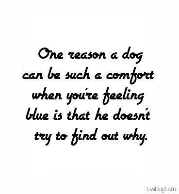 💞🐶 #dogquote #dog #doglove  #evadog #ilovedogs #quote https://t.co/GL4qGUaykK