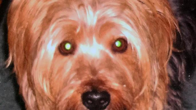 Scotland Yard dispatched two canine units, a police van and two other vehicles to catch this ten-year-old terrier https://t.co/v3gEIiBues
