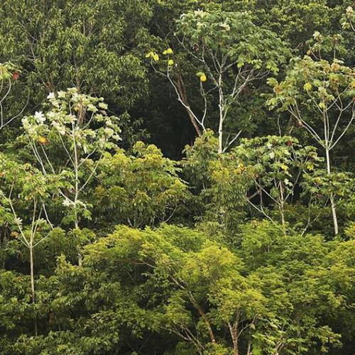 Temer libera reserva na Amazônia para exploração https://t.co/QSQWJPKK8S