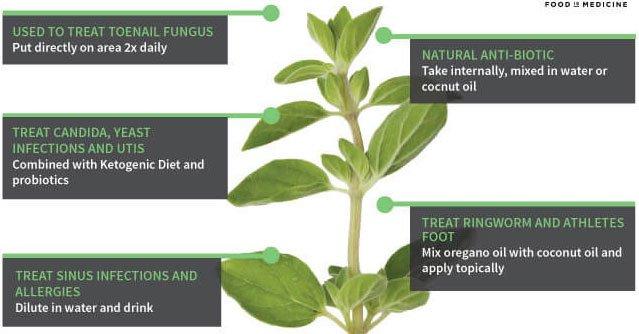 Oregano is a culinary herb with remarkable #health benefits -   http:// ahealthblog.com/eq3b  &nbsp;  <br>http://pic.twitter.com/W8rk0Ur5Mi