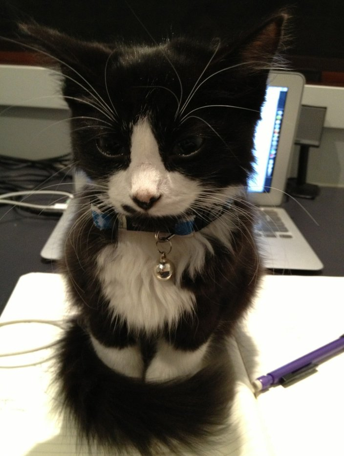 Look at the way this #kitty wraps his tail around his legs......too cute! <br>http://pic.twitter.com/BAGcsJ2p3K