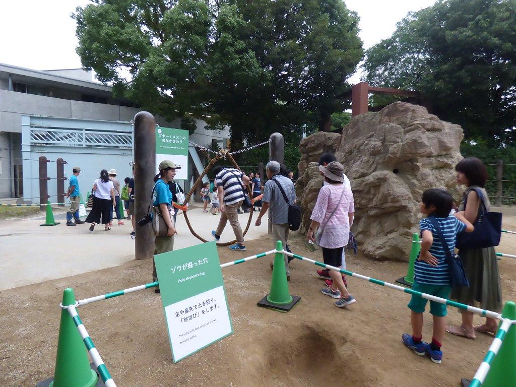 今日は #世界ゾウの日、大人気のイベント「ゾウの運動場に入ってみよう」は5時~5時45分開催。6時3…