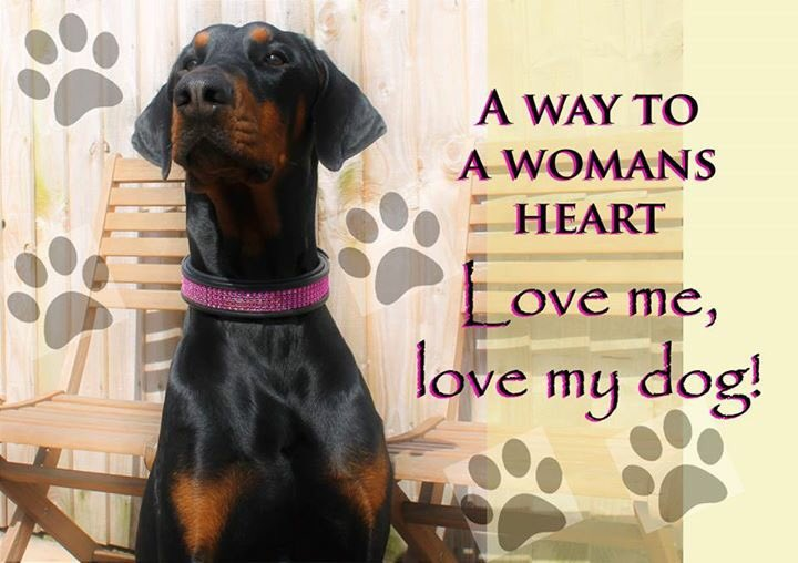 Love #dogs #shoutout to #Clubdobe #UkRescue #goodvetguide #follo #following<br>http://pic.twitter.com/6LLXw2Kh07