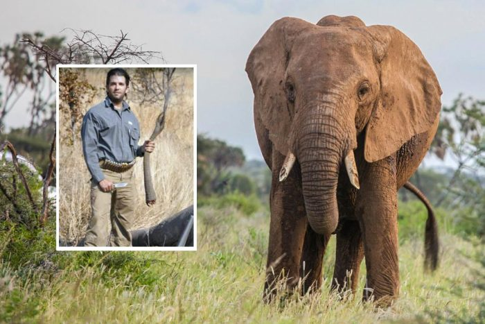 Happy #WorldElephantDay from #DonaldTrumpJr! #DonaldTrump #ImpeachTrump #GOP #TheResistance #IndictTrump #RussiaGate #Resist #MAGA #AltRight<br>http://pic.twitter.com/XL6W90eFsr