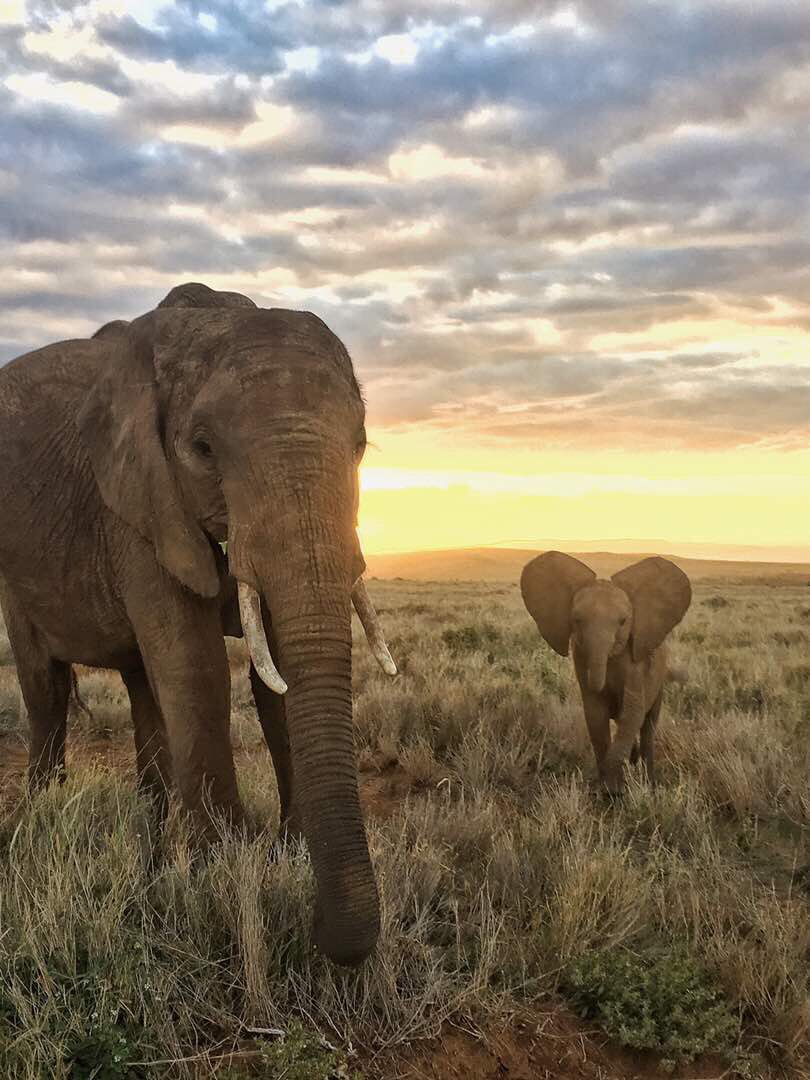 Lewa Wildlife Conservancy On Twitter Happy Worldelephantday The