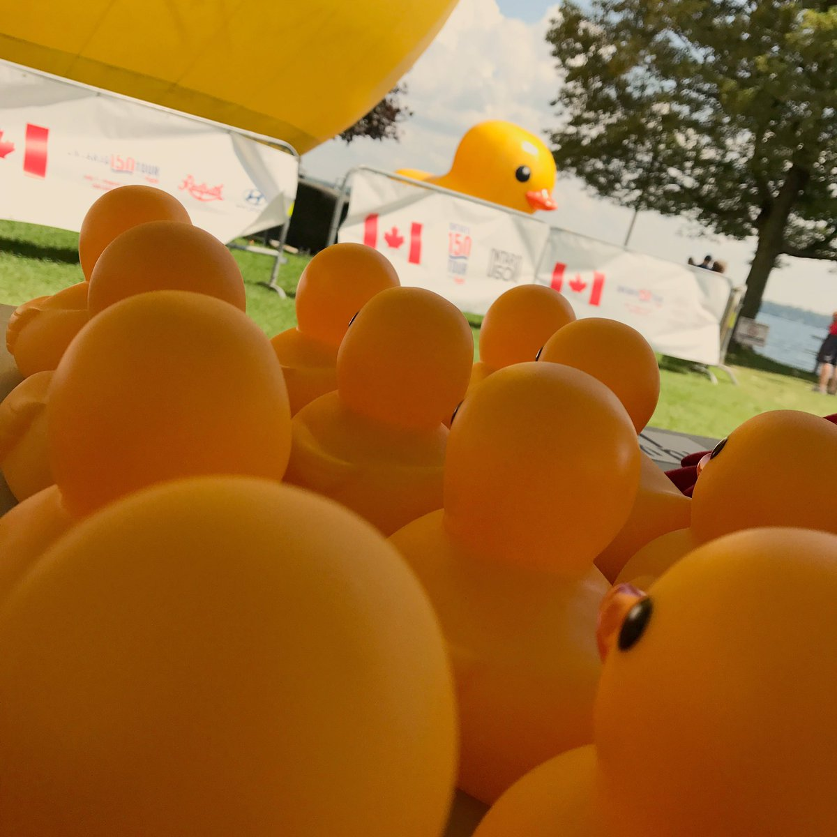 Largest Rubber Duck on Twitter: \