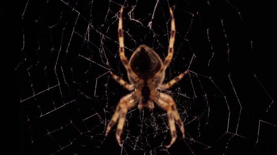 Watch this beautiful time-lapse video of a spider building its web https://t.co/077ralI7zj https://t.co/ugzwnwaXT9