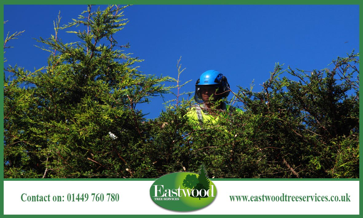 Email eastwoodtree.services@treefella.com to speak with a member of our team. #Eastwood #TreeSurgery #TreeSurgeon<br>http://pic.twitter.com/XmrkllfuVv
