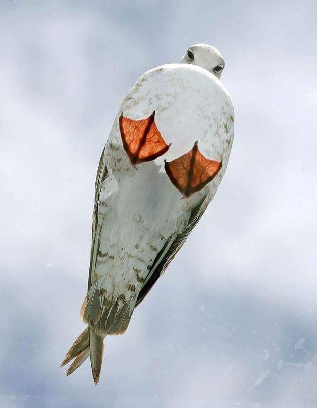 Seagull on a glass roof.  Best thing I\'ve seen all day.