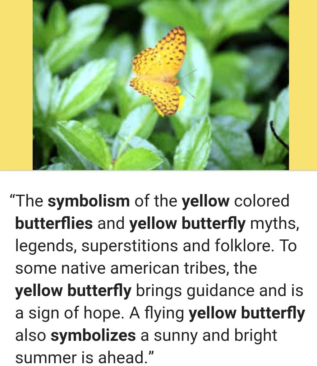 Yellowbutterfly twitter search yellowbutterfly twitter search buycottarizona