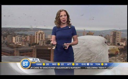でかっ  カナダのTV番組、ドアップで映り込んだ「巨大カモメ」が放送されるハプニング → 連続発生し…