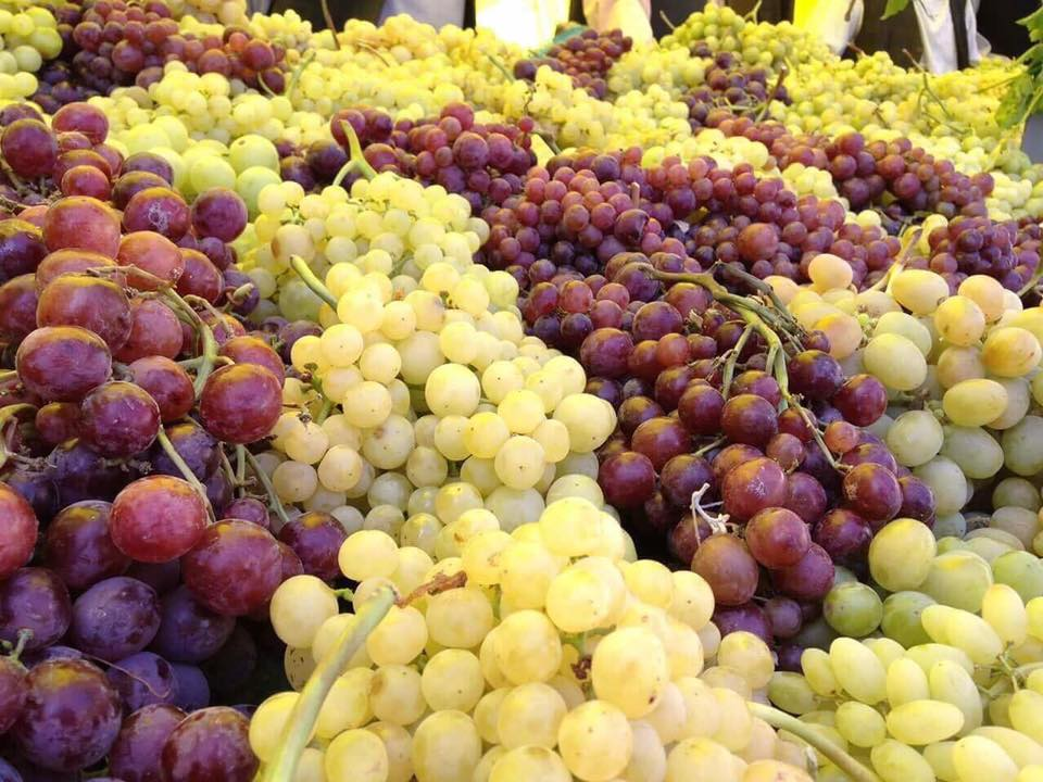 More than 100 types of grapes go on display in #Herat Grape Festival. #Afghanistan re-emerges as key #fruit supplier of the region &amp; beyond. <br>http://pic.twitter.com/C9aGC7wxxT