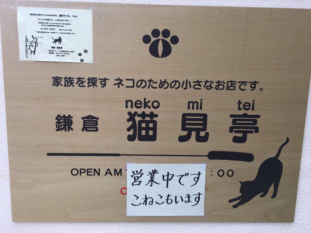鎌倉にある保護猫カフェさん。お店の人曰く、あまり人が入らないらしくて、もし鎌倉で猫カフェに行きたいな…