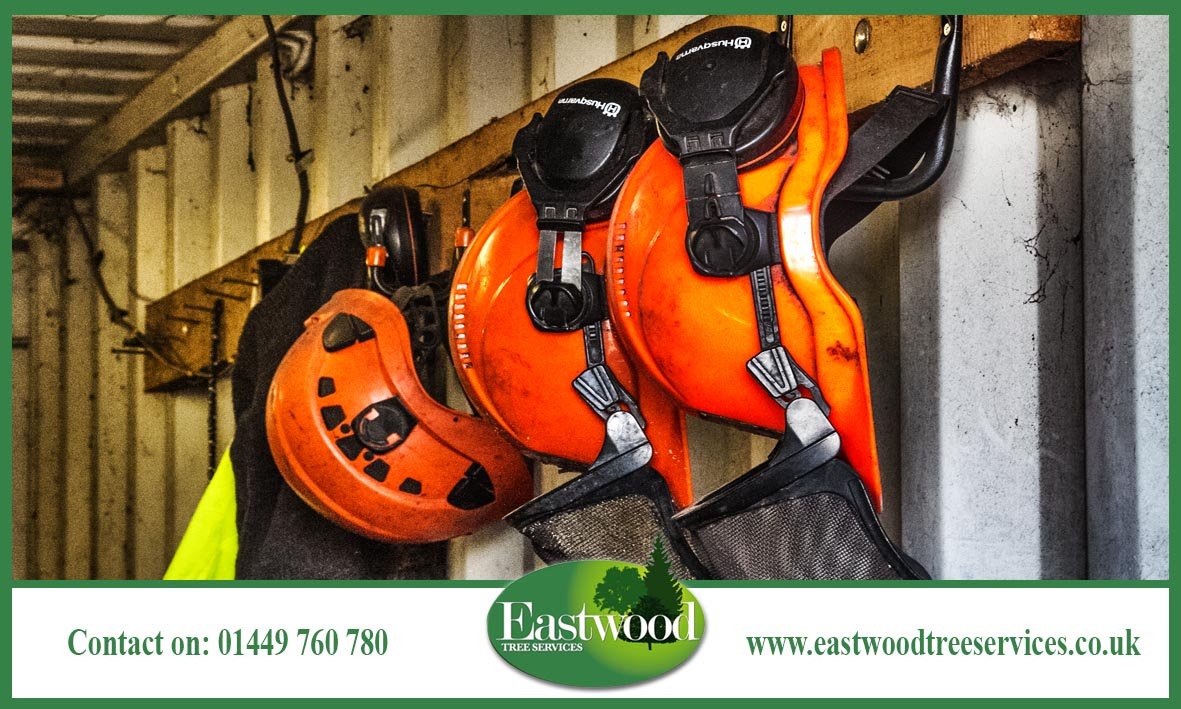 We are the leading specialist on Japanese #Knotweed in the #Eastwood &gt;&gt;  http:// bit.ly/EastwoodTreeSe rvicesKnotweed &nbsp; … <br>http://pic.twitter.com/WzH2rnJB6c