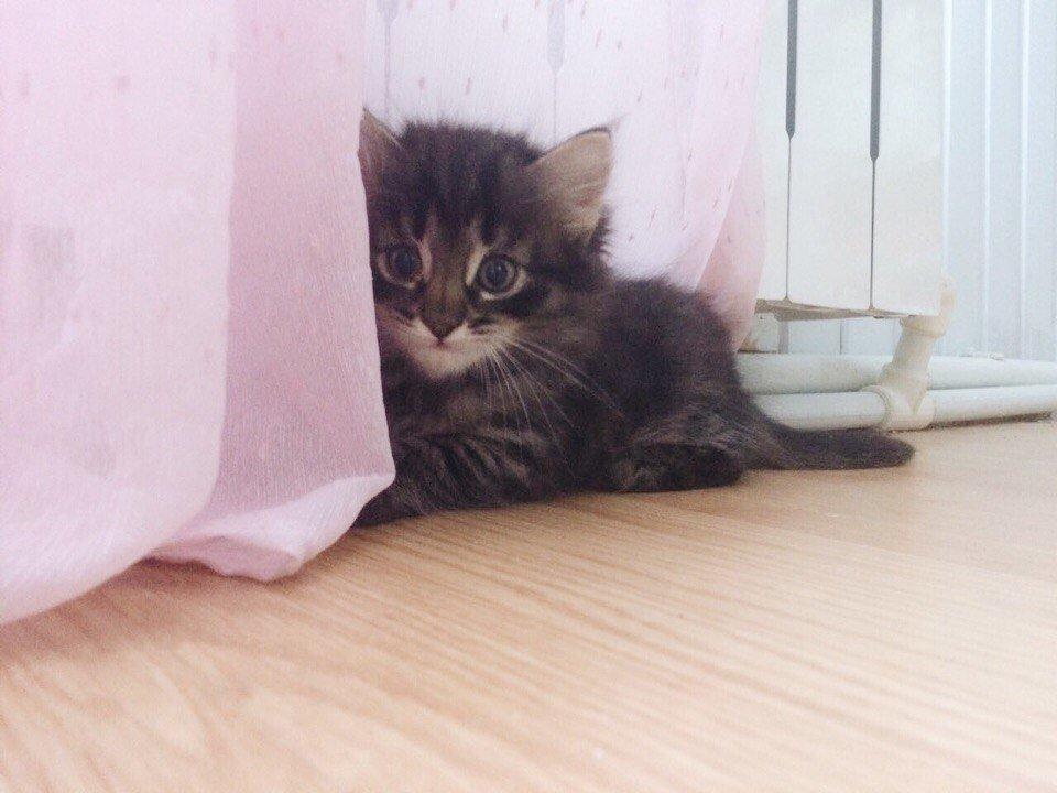 валяние из шерсти кошки фото