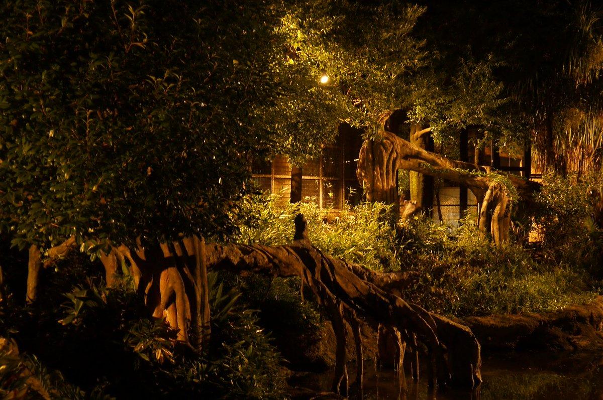 真夏の夜の18:00~20:00だけ、幻想的にライトアップされたアメリカバク舎。 たまには現代の喧騒…