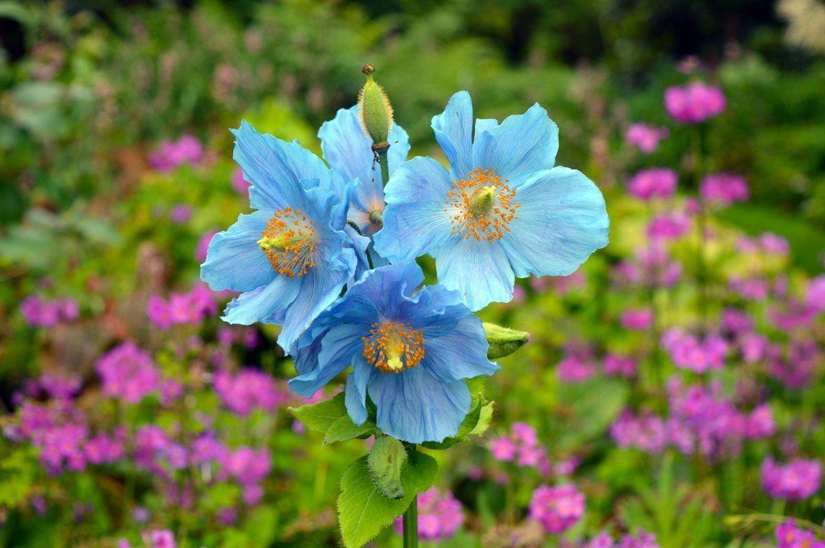 #LoveFlowers Garden: The garden is looking splendid @TheBotanics Nice place to visit<br>http://pic.twitter.com/kyK9BqFHEx