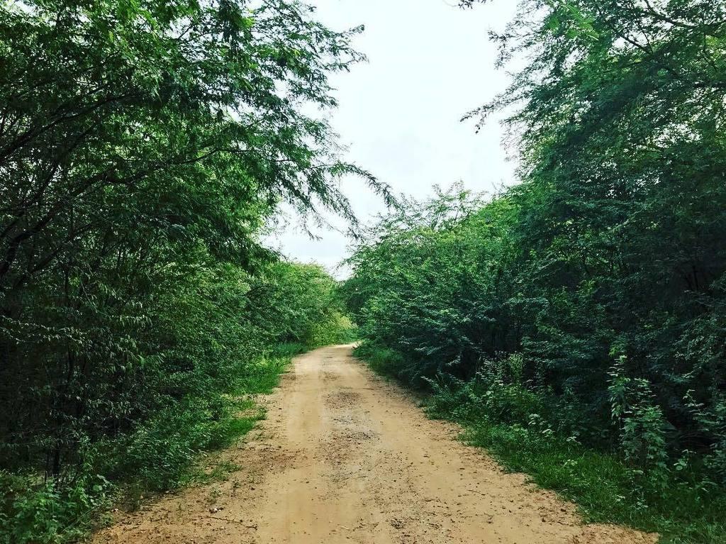 #Greenery #RoadToNowhere #Forest #OutSkirts #PhonePhotography #ShotOni...