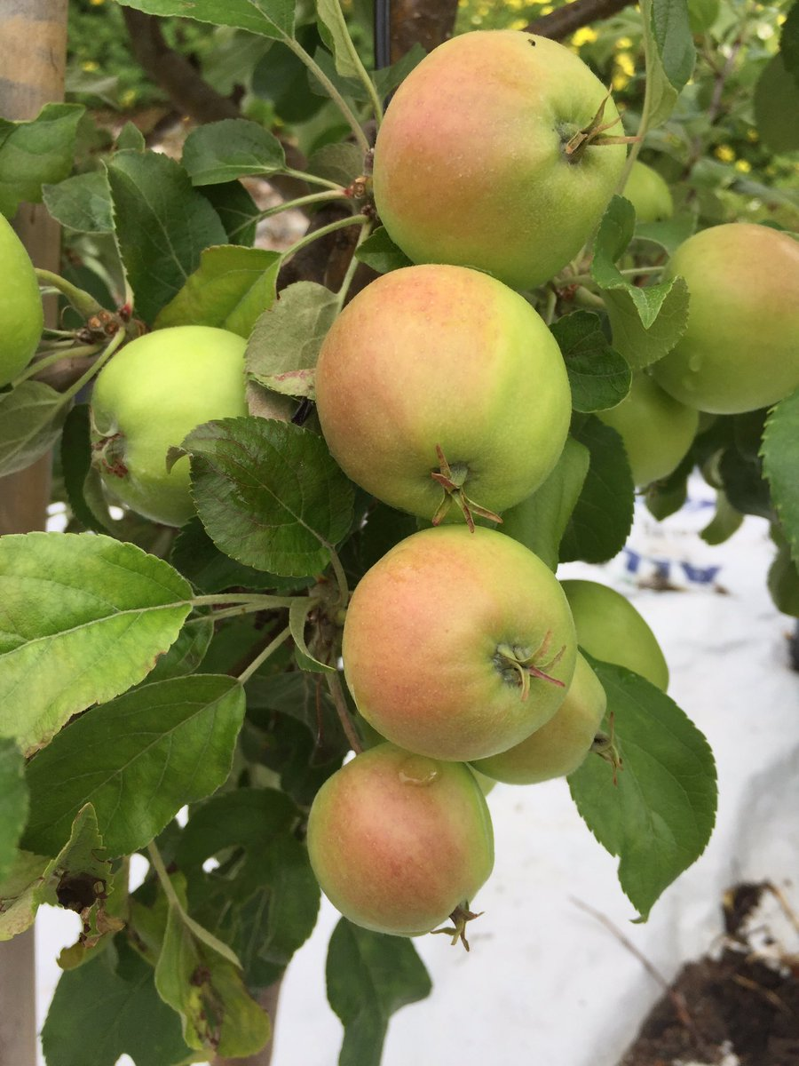 Sonia b glover on twitter theres nothing like eating fresh fruit lots of fruit trees at beauty of flowers nursery waiting for you buylocal httpst3hyuvmk9rp izmirmasajfo